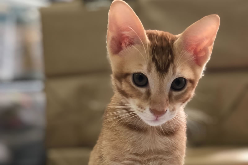 Donate A Cat For Adoption